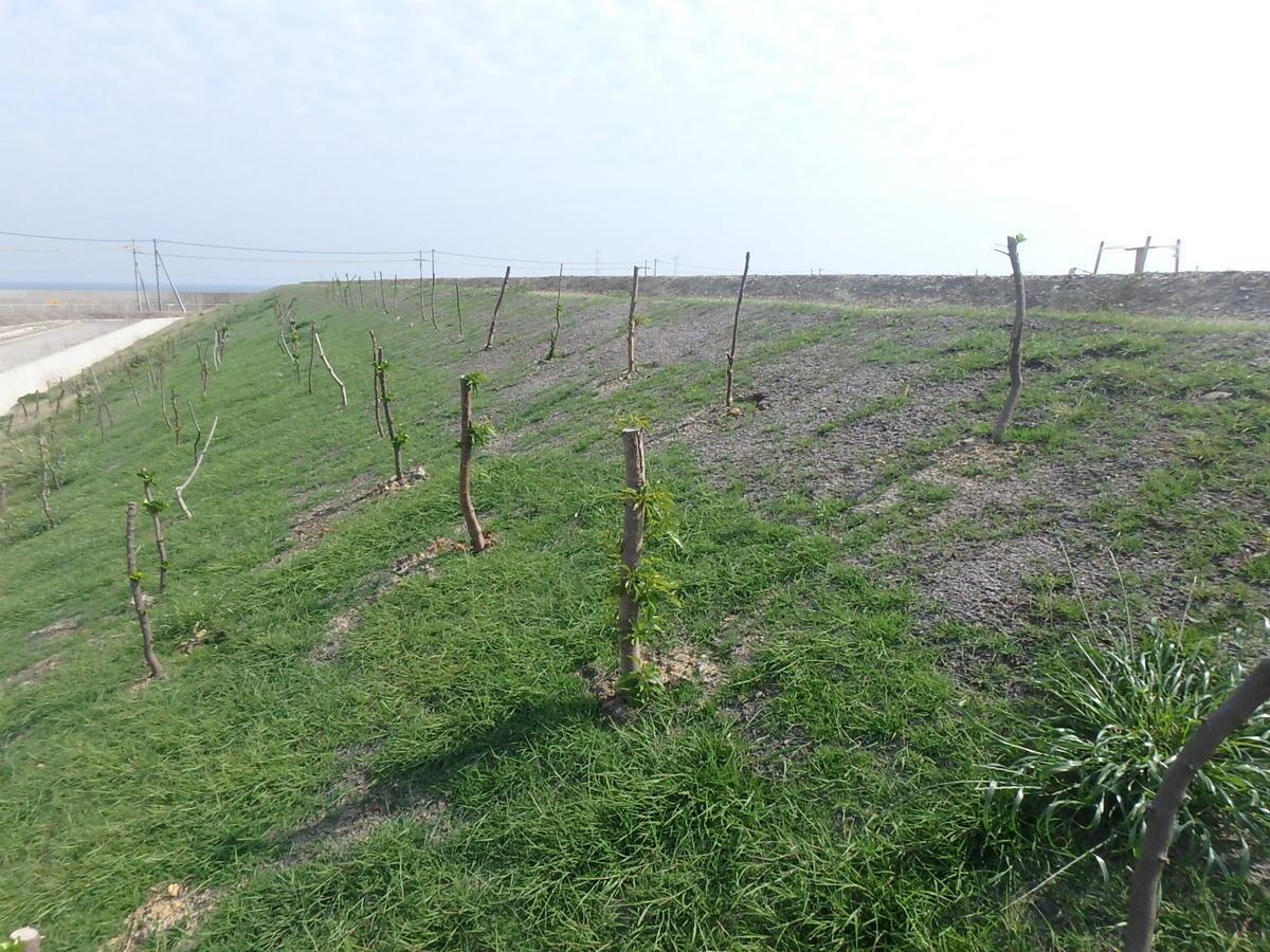 今冬移植した木と法面緑化.jpg